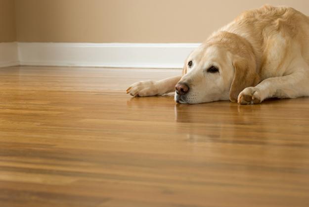 Mineralstoffmangel Hund