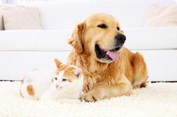 Hunde und Katze sollen regelmäßig entwurmt werden.