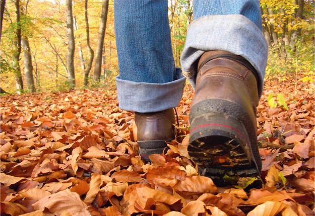 Wandertour durch den Herbstwald