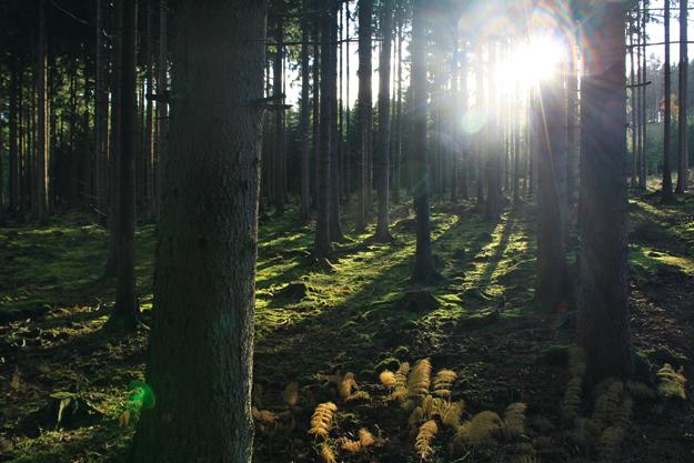 Die Wald Retter